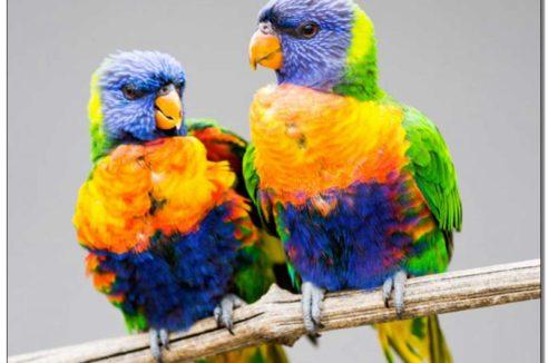 Stimulation Secteur SUD-OUEST : «Couple haut en couleurs»