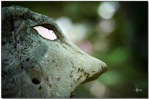 Stimulation Secteur CENTRE : «L'alpha de l'âme»