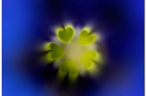 Stimulation Secteur NORD : «Les cœurs au cœur»