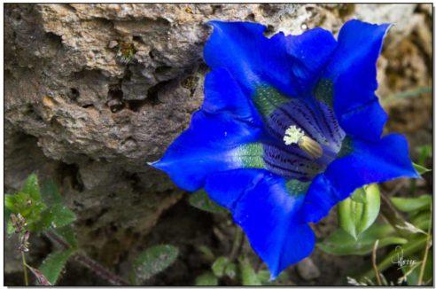 Stimulation Secteur NORD : «L'étoile Bleue»