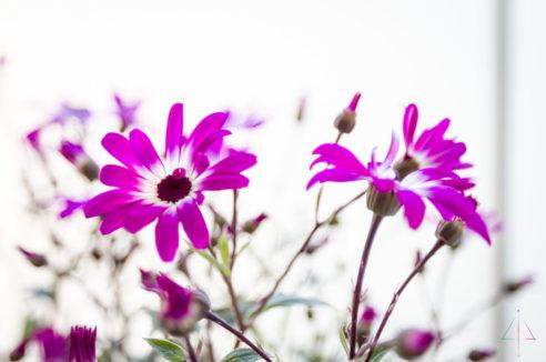 Stimulation Secteur SUD : «Feu Flower»